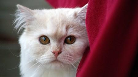 förgiftning hos katt