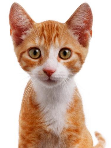 Skaffa en bra kattförsäkring