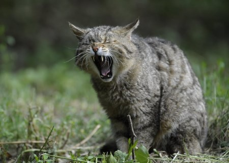ormbiten katt