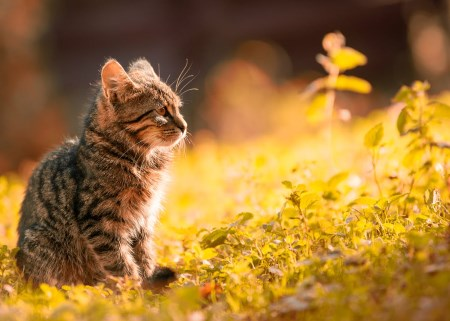 urinsten katt