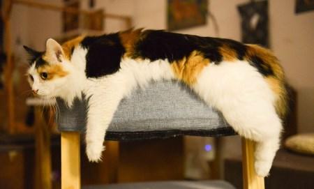 urinvägsinfektion katt